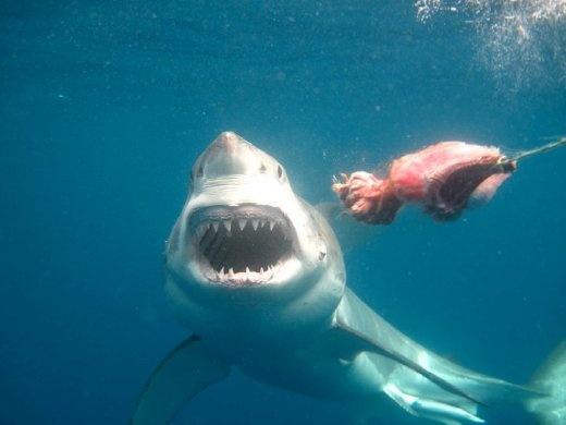 如果你有潛水,你就會明白我點解咁想見到佢架喇!