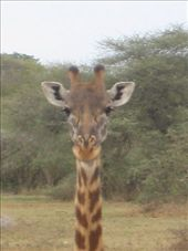 by miss_tanzania, Views[184]