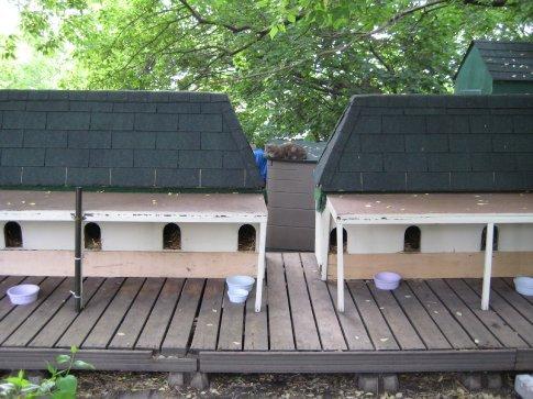 A cat sanctuary run by volunteers