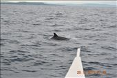 the closest thing we can get to a dolphin...: by mlroa1015, Views[244]
