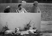 Summer: Three locals sitting on the lake's concrete benches while  two dogs sleep near them.: by mogosa, Views[85]