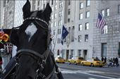 New York is loud with traffic and taxi's honking their horns, but every now and then you get a different sound the clip, clop, clip, clop. : by mon, Views[217]