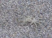 Let's play where's the ghost crab...: by monkeypoo, Views[383]