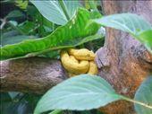 Eyelash viper: by monkeypoo, Views[60]