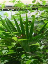 Coral snake: by monkeypoo, Views[100]