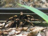 Tarantula: by monkeypoo, Views[90]