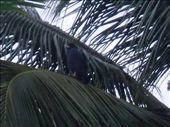 Black hawk: by monkeypoo, Views[67]
