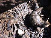 Scorpion vs. lizard: by monkeypoo, Views[385]