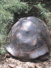 Big tortoise: by moomazza, Views[218]