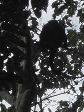 Monkeys again: by moomazza, Views[208]