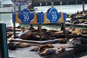 Sea Lions at Pier 39: by mooshie, Views[114]