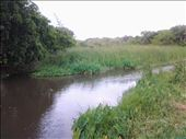 A river flows to the Indian Ocean from Camp Creole, Albion Mauritius: by mosesang, Views[99]