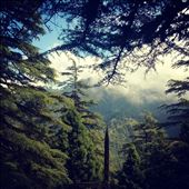 Camel's Back, Mussourie. View from the track. Winters. : by mountaindaughter, Views[57]