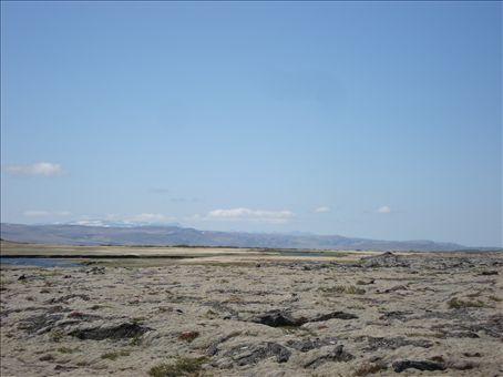 Mossy lavafields