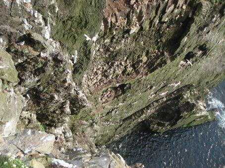 More Latrabjarg cliff action