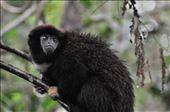 Titi Monkey: by mtmmeyer, Views[37]