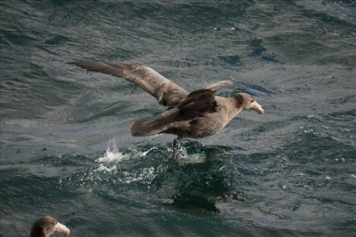 This rare sighting of wildlife came as the ferry was leaving the port.