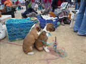 awwww....cute little puppies...: by muimui2009, Views[205]