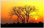 Make your own sunshine. Capture for life at - Rewa, Madhya Pradesh, India: by munira_india, Views[727]