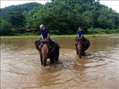 Riding and playing with the elephants.: by mwollak, Views[76]