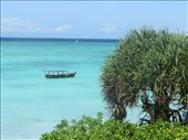 View from the Ras Nungwi Resort on Zanzibar!: by my_year_of_yes, Views[78]