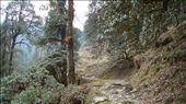 Jungle way to Tungnath, Ukhimath, Garhwal, Uttarakhand, India: by mythdrinker, Views[998]