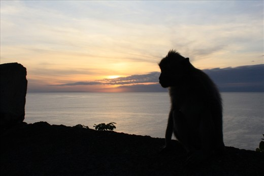 A local monkey watches the sunset from the edge of a cliff in an ancient buddhist temple in Bali, Indonesia.