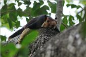 Indian Giant Squirrel - wakes up in the morning : by nagasrinivasu, Views[566]