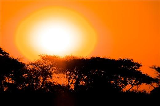 Red hot Namibian sunrise over Acacia trees