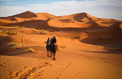 Camels are still