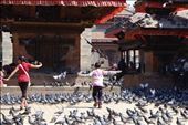 A boy spreads his wings amongst an army of pigeons, as if to fly away: by nathanburley, Views[162]