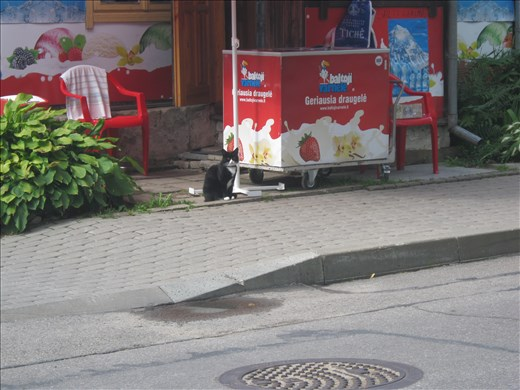 The cat who sold the ice