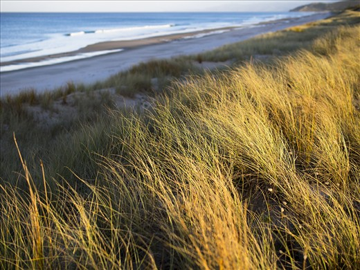 Light captures the glow of the dunes grasses as it disappears for another day.
