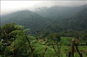 Bwindi Impenetrable Forest. This is where we trekked to find to gorillas.: by nem, Views[49]