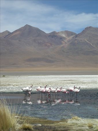 You never really picture flamingos at 15,000ft surrounded by ice, but there they were