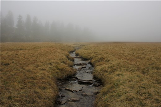Mystical fog hovering over a mountain stream at an elevation of over 5,000 ft.