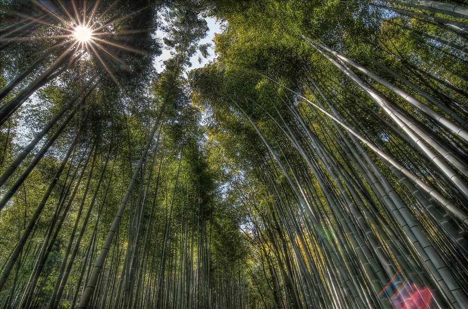 Vast swathes of bamboo is grown to manufacture baskets using ancient techniques