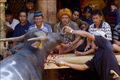 The peak ritual of Rambu Solo, where at least a dozen buffaloes sacrificed.: by nickmatulhuda, Views[530]