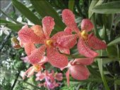 Orchids: by nicola, Views[248]
