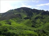 Boh tea plantation, stunning!: by nicola, Views[141]