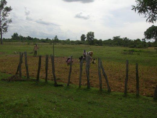 People working in the fields