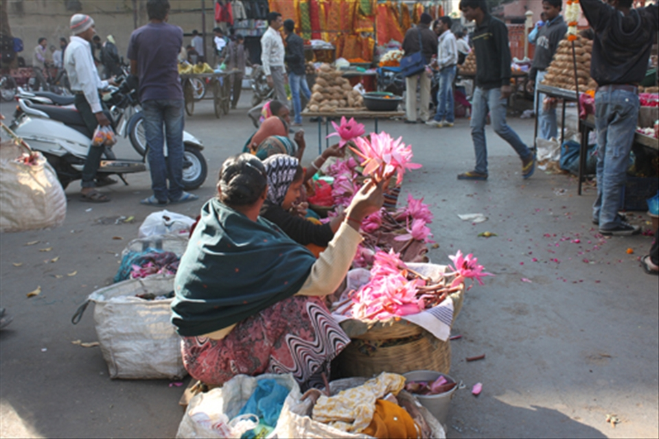 The lotus flower is the national flower of india here it is being the lotus flower is the national flower of india here it is being sold in mightylinksfo