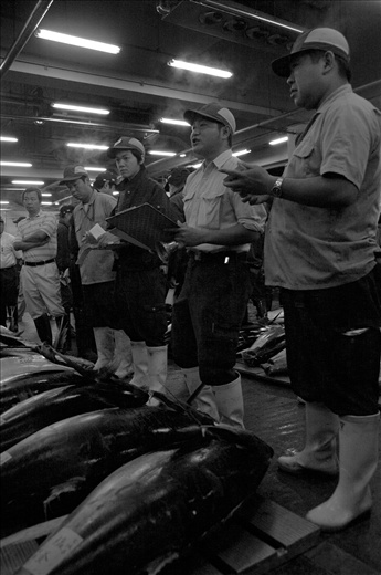 Tsukiji connoisseurs of Tuna, from market to plate.
