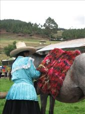Preparation of the horses before our horse ride to the bridge of the Incas on the Porcón farm.: by nigelb, Views[219]