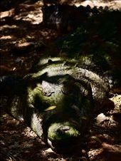 lurking croc: by nightshade, Views[86]