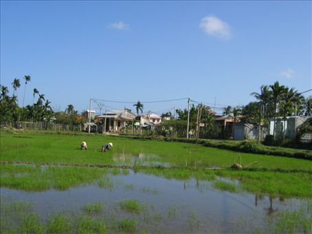 Rice paddies and telephone poles, they go to together like peanut butter and mustard.