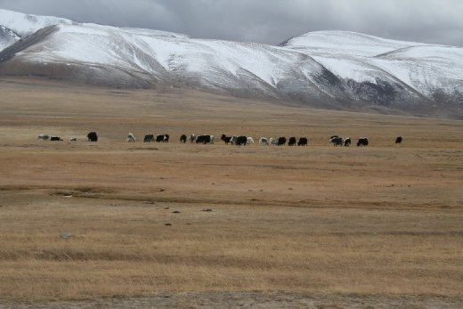 Mongolia - looks cold; is cold!