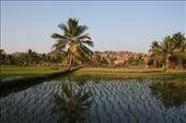 India, Hampi: I love rice paddy fields: by niviosabine, Views[286]