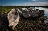 Mokoros in the Okavango Delta: by nkozel, Views[159]