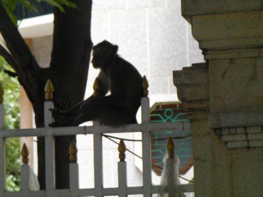 Just monkeying arand